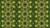 Abstract animated kaleidoscope motion background. Sequence multicolored graphics ornament patterns. Bright luminous light backdrop. Multicolored seamless loop background. Natural green yellow backdrop