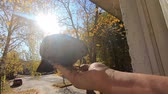 Girl feeds gray pigeon that sits on her palm hand on sunny autumn day. Feeding birds pigeons from hand. POV, point of view close-up. Nature wildlife outdoor yellow leaves sun rays beams sunny blue sky Stok Video