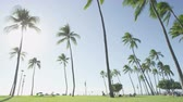 fundo : Palm trees and clear blue sky on Waikiki Beach, Honolulu, Oahu, Hawaii, USA.
