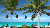guarda chuva : Palm trees and blue sky on vacation beach. Perfect Caribbean paradise beach with parasol umbreallas and turquoise water.