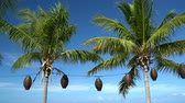 meksyk : Palm trees and blue sky on vacation beach
