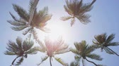 солнечный : Palm trees background in sun flare - tropical summer concept. upward view of tall flowing coconut trees in the fresh breeze against a perfect blue sky in the Caribbean. Tropics exotic destination Стоковые видеозаписи