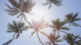 meksyk : Tropical palm trees against blue sky background - beach vacation summer concept. Upward view of tall flowing trees in the fresh breeze against a sun flare in the Caribbean - exotic destination. Wideo