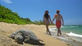 holding : Hawaii beach scene with sea turtle and romantic couple holding hands enjoying travel vacation on Big Island. Focus on turtle.