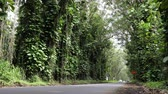 tall : Forest road on Kauai, Hawaii, USA. Road with eucalyptus trees in beautiful Hawaiian nature landscape. Stock Footage
