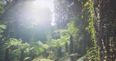 tramp : New Zealand swamp forest nature landscape in Ship Creek on West Coast of South Island of New Zealand. Famous tourist destination on New Zealand. SLOW MOTION. Stock Footage