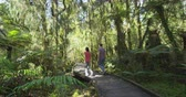 pista : New Zealand. People hiking in swamp forest nature landscape in Ship Creek on West Coast of New Zealand. Tourist couple sightseeing tramping on South Island of New Zealand.