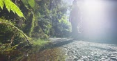 известный : Hikers healthy active lifestyle in New Zealand. People hiking in swamp forest nature landscape in Ship Creek on West Coast of New Zealand. Tourist couple sightseeing tramping on New Zealand.