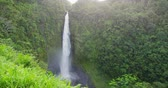 estados : Hawaii Akaka Falls - Hawaiian waterfall on Big Island. Beautiful pristine nature landscape scene showing the famous waterfall, Akaka falls in lush scenery