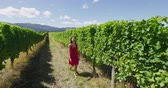 kalifornie : Vineyard woman tourist on New Zealand travel visiting Marlborough region winery walking amongst grapevines. People on holiday wine tasting experience in summer valley landscape Dostupné videozáznamy