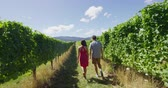 marlborough : Vineyard couple tourists New Zealand travel visiting Marlborough region winery walking amongst grapevines. People on holiday wine tasting experience in summer valley landscape. Stock Footage