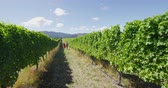 виноградник : Vineyard - romantic couple holding hands walking by grapevines on wine tour in wine region visiting winery. People on holiday or wine tasting experience in summer valley landscape. SLOW MOTION.