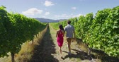 parreira : Vineyard couple tourists New Zealand travel visiting Marlborough region winery walking amongst grapevines. People on holiday wine tasting experience in summer valley landscape. Stock Footage