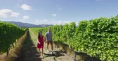 vinařství : Romantic couple holding hands in vineyard walking by grapevines on wine tour in wine region visiting winery. People on holiday enjoying wine tasting experience in summer valley landscape. SLOW MOTION.