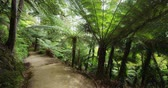 kiwi : New Zealand Forest Tramping Track Hiking Trail Abel Tasman National Park