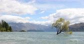 veren : Wanaka New Zealand lone tree of Lake Wanaka famous tourist attraction Stok Video