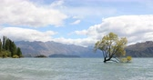 остров : New Zealand landscape nature - lone tree of Lake Wanaka famous tourist attraction. THAT WANAKA TREE. Стоковые видеозаписи