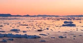 jakobshavn : Ice and Icebergs from glacier - amazing arctic nature landscape aerial video of icefjord filled with icebergs from melting glacier Sermeq Kujalleq, Ilulissat, Greenland. Midnight sun. Stock Footage