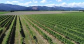 marlborough : Vineyard on New Zealand Marlborough - grape vines for wine making of wine. Countryside farm fields showing viticulture. Aerial drone video.