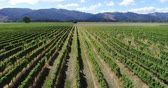 italiano : Aerial drone video of Vineyard - grape vines field for wine. Countryside farm fields showing viticulture.