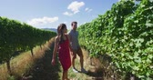 vinná réva : Vineyard people - Couple looking at Grapes on Vines In Vineyard Walking By Grapevines On Vacation. Man and woman are exploring vineyard together. They are spending leisure time in summer vacation.