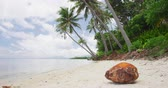 coco : Palm trees on tropical beach with Coconut In Sand. Paradise beach background. SLOW MOTION.