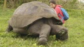 riese : Galapagos Giant Tortoise and woman tourist on Santa Cruz Island in Galapagos Islands. Animals, nature and wildlife video close up of tortoise in the highlands of Galapagos, Ecuador, South America. Stock Footage
