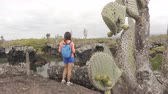 turistler : Galapagos tourist visiting Los Tuneles aka The Tunnels on Isabela Island, Galapagos Islands. Famous visitor site for sightseeing, snorkeling and diving boat day tour. Happy woman looking at nature.