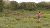riese : Galapagos Giant Tortoise on Santa Cruz Island in Galapagos Islands. Group of many Galapagos tortoises cooling of in water hole. Amazing animals, nature and wildlife video from Galapagos highlands.