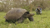 galapagos : Galapagos Giant Tortoise and tourist photographer on Santa Cruz Island in Galapagos Islands. Animals, nature and wildlife video close up of tortoise in the highlands of Galapagos, Ecuador. Stock Footage