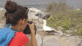 equador : Galapagos tourist taking pictures of Nazca Booby on Espanola Island, The Galapagos Islands. Wildlife photographer and ornithologist photographing the Galapagos nazca boobies. Stock Footage