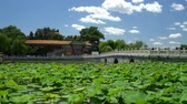 flor de loto : Chinese garden in Beijing - famous public park. Giant water lily plants, bridge and traditional building on beautiful blue sky summer day in Beijing, China. Used by locals and a tourist destination. Archivo de Video