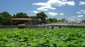 Пекин : Chinese garden in Beijing - famous public park. Giant water lily plants, bridge and traditional building on beautiful blue sky summer day in Beijing, China. Used by locals and a tourist destination. Стоковые видеозаписи