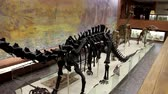 lizard : Moscow, RF - 12052019: Dinosaur skeletons in the Museum of Paleontology in Moscow. Dinosaurs in full growth. Dinosaur bones.