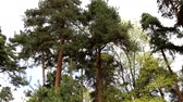 Mixed forest - coniferous and deciduous trees in the same forest. Beautiful landscape. Only the sky is visible.
