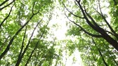 Sun rays make their way through the foliage. Beautiful forest in the park area. Summer. The sun is shining. Wideo