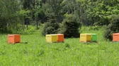 Multi-colored beehives in the apiary with bees. Beekeeping. Beehives in the meadow.