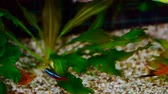 неон : aquarium colourfull fishes in dark deep blue water.