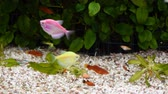 изолированный : Diverese fish in an aquarium.