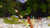 Close Up view of many different fish eating food in home aquarium.