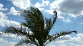 palm and clouds with blue sky