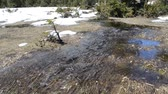 wetland : The thaw water flows