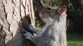 esquilo : squirrel grey feeding