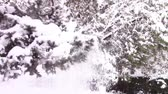 tekrarlanan : Shaking of a fir tree branch with repeated movements until all the heavy snow is falling off