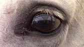 horse face : Closeup of a white horse eye blinking , curious about being watched.