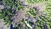 Flying over mountain forest with coniferous and deciduous   trees in early spring ,  and limestone geological rock formations , aerial view