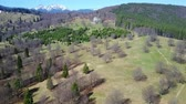 Deciduous and coniferous forest in early spring with alpine meadows and snowy peaks of the Ciucas Mountains , middle Carpathians range, Romania, aerial view