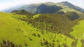 Scattered fir trees on alpine meadows of the Ciucas Mountains , Romania, middle Carpathian range, with high peaks in the background, sunny summer day, aerial view