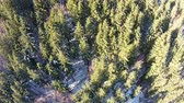 Flying over forest with mixture of coniferous and deciduous trees in the winter , aerial shot