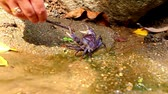 adapted : female hand touches crab stick in deep forest pond. Video